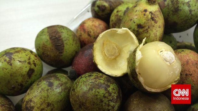 Matoa, buah khas Papua yang memiliki rasa mirip durian (CNN Indonesia ...