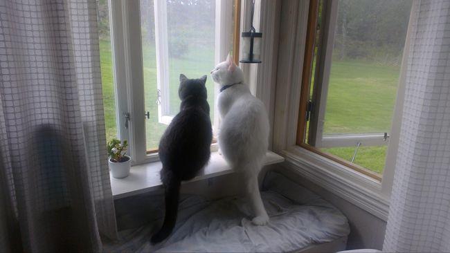 Perempuan Bermata Buta Separuh Setelah Dijilat Kucingnya