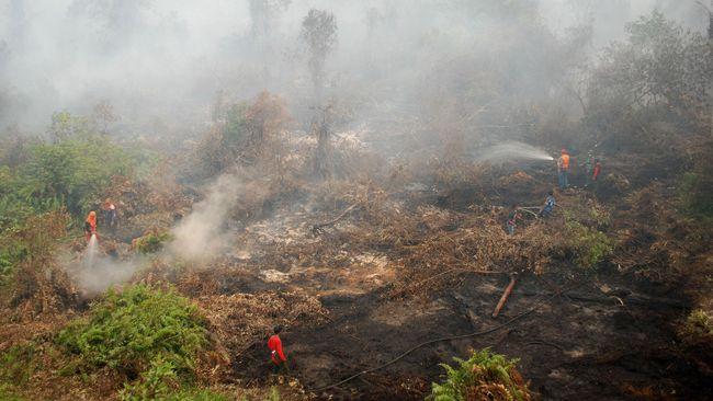 Kala Pemerintah Takluk di Bawah Kobaran Api Kebakaran Hutan