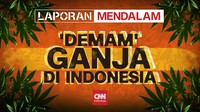 'Demam' Ganja di Indonesia