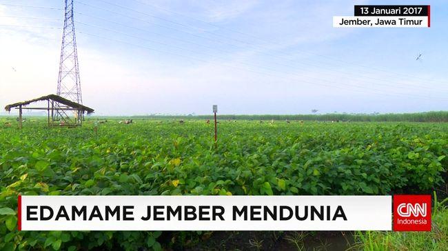 CNN Indonesia Detail: Edamame Jember Mendunia