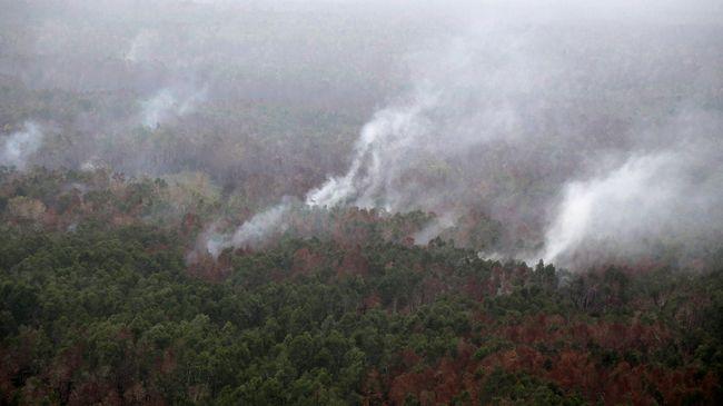 WALHI Siapkan Gugatan ke Perusahaan Pembakar Hutan